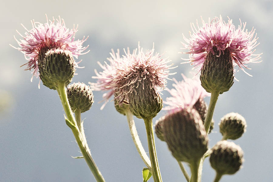"""Thistles from Below"" by Caryn Caldwell"