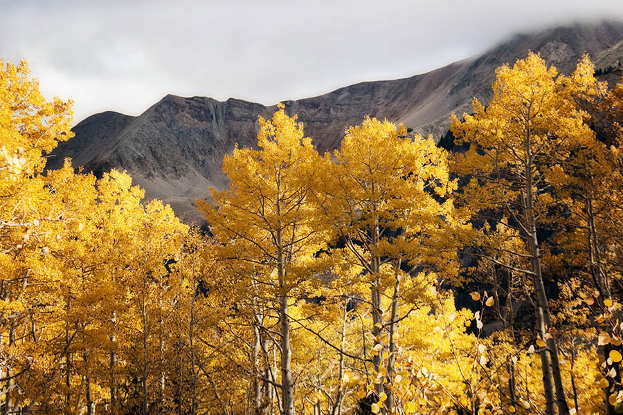"""Aspen and Mountains"" by Caryn Caldwell"
