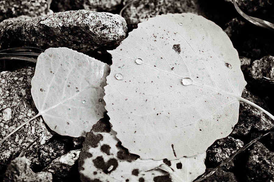 """Leaf Pile in Black & White"" by Caryn Caldwell"