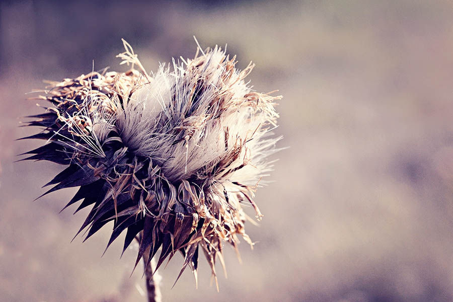 """Winter Thistle"" by Caryn Caldwell"
